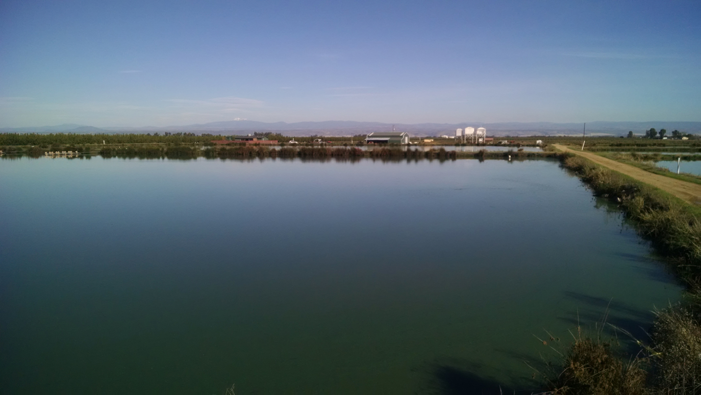 For sale northern california warmwater aquaculture for Fish stocking ca